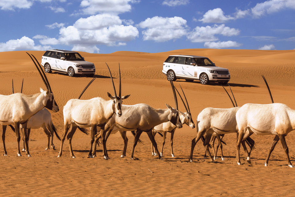 Luxury desert safari at the Dubai Desert Conservation Reserve